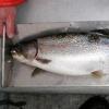 Peter C.s big trout