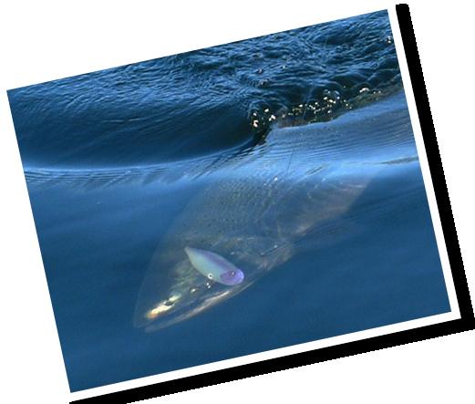 fish crop and darker crop2